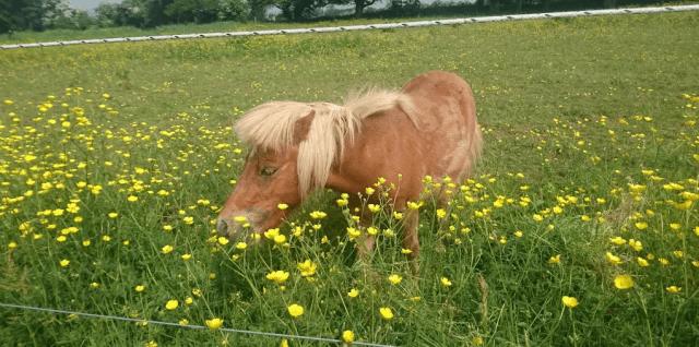 Le Chéile visits the Limerick Animal Welfare Field of Dreams