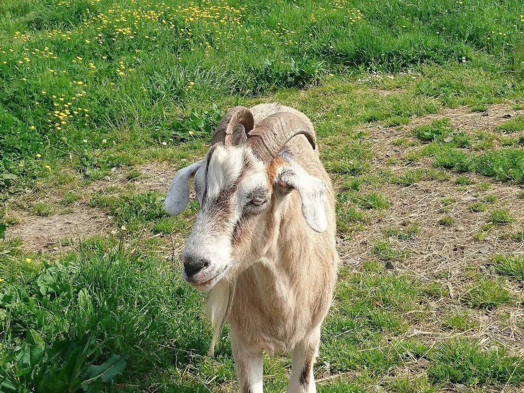 limerick animal welfare