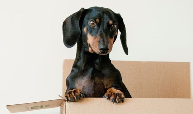 Online Webinar: 'Separation Anxiety And Pets' by Rockhall Veterinary